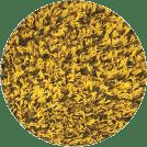 Yellow Playground Grass